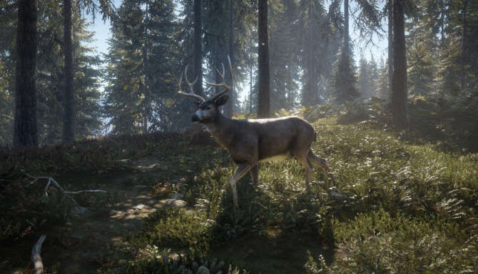 theHunter Call of the Wild cracked